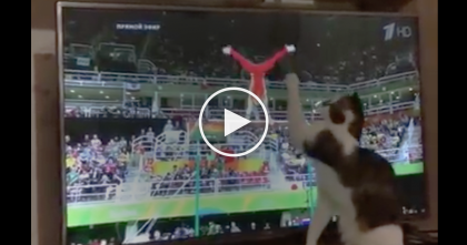 Kitty Gymnast Tries Help Out With Olympic Games, But The Results Are HILARIOUS… Just Watch!!