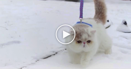 Kitty Has Never Seen Snow Before, But When He Puts His Paws In It?? LOL, You Gotta See This!!