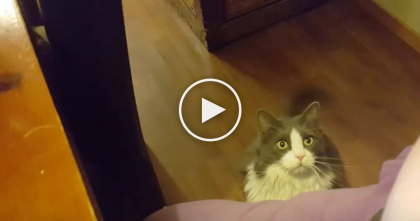 Kitty Just Wants Some Love, But When You See Those Eyes…Just Watch, Nobody Can Say No…OMG!