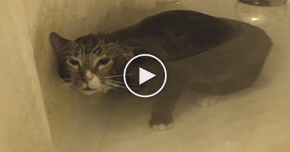 Kitty Takes A Bath, But The Sound He Makes?? Just Turn Your Volume Up… Oh. My. GOODNESS.