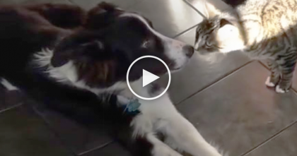 Kitty Walks Up To Dog And Takes One Sniff, But What They Recorded Next… NOPE, NOPE, NOPE!