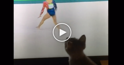 Little Kitten Just CAN'T Resist The Screen When He Notices The Olympic Games, This Is SOO Adorable…