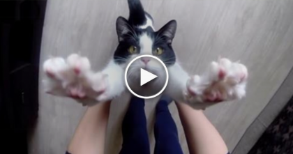 Rescue Cat Dumped In A Box, But Now Watch What He Does Every Day… Sweetest Thing EVER!!