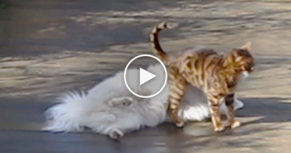 Cat Gets In Fight With Dog, Starts Cleaning Him, But Then… OMG, Did He Really Just Do That?!
