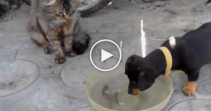 Selfish Dog Barks At The Cats, Tries To Scare Them, But Then… Keep Watching Till The End, Hahaha!!