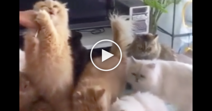 She Brings Some Treats Home To Her Cats… Now Watch How The Cats React, SOO Cute!!