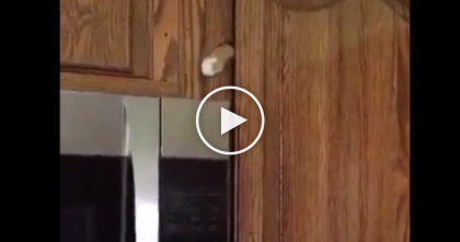 She Calls For Her Cat Bella, But Keep Watching… Look At The Cupboard And You'll See It… Oh My!!