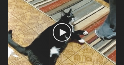 She Gives Her Cat Some Commands, But Just Keep Watching… I'm Speechless, This Is AMAZING…