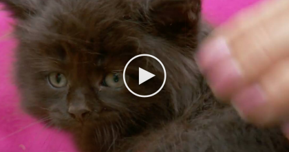 She Heard A Kitten Meowing, But When They Came Closer… Just Watch Where They Find Him, OMG.