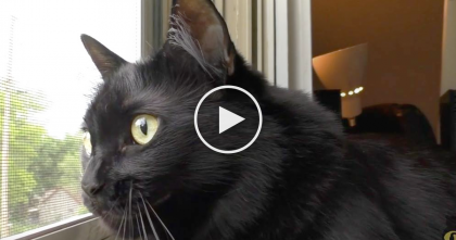 "Some People Are Superstitious About Black Cats, But After Watching This Video… ""Aww, So Cute!"""