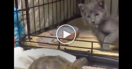 Stray Blind Kitten Makes A New Friend, And When You See Them Together, It's The Cutest Thing EVER…