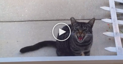 Stray Cat Comes For Food, But LISTEN To The Sound He Makes.. OMG, Never Heard Anything like This?!