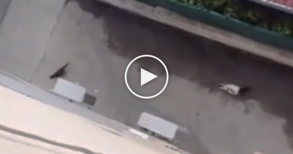 They Try Not To Scare This Stray Cat, But What They See Next… Just Watch It, TRULY Unbelievable, wow!!