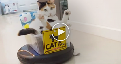 Cat Relaxes In Custom Chariot Car, Now Watch How This Works, Hahaha… OMG, This Is Hilarious!!