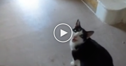 Cat Starts Meowing At Owner, But When She Follows Her… The Surprise She Gets, OMG!!