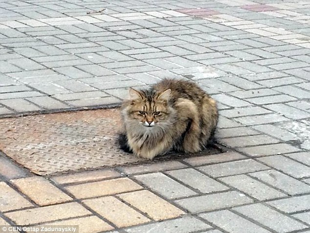 cat-waiting-for-owner-2