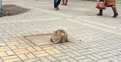 Cat Waited In The Same Spot Every Day For His Owners For Over A Year After Being Abandoned