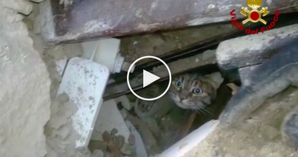 Firefighters Rescue Cat Buried In Earthquake After 16 Days In Italy Earthquake Rubble