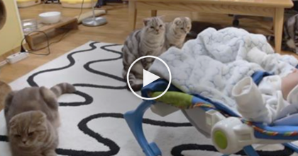 Five Cats Discover The New Baby For The First Time…Now WATCH Their Reaction, It's  Adorable!!