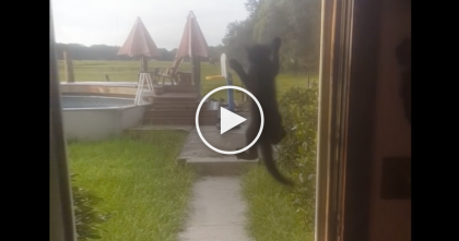 Kitten Does The CRAZIEST Thing Ever When He Wants To Come Inside…NEVER Seen Something Like This!!