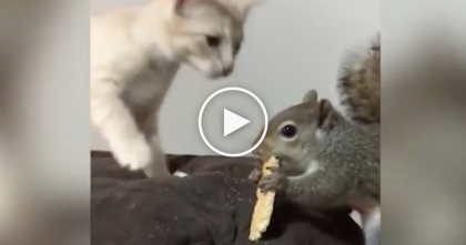 Kitten Wants To Play With Squirrel Even Though He's Eating And It Turned Our Hilarious, Just Watch!