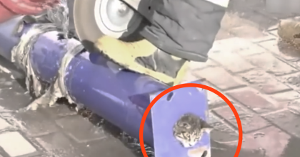 Kitten Was Stuck In Massive Pipeline, But Then Firefighters Come To The Rescue In This Amazing Video