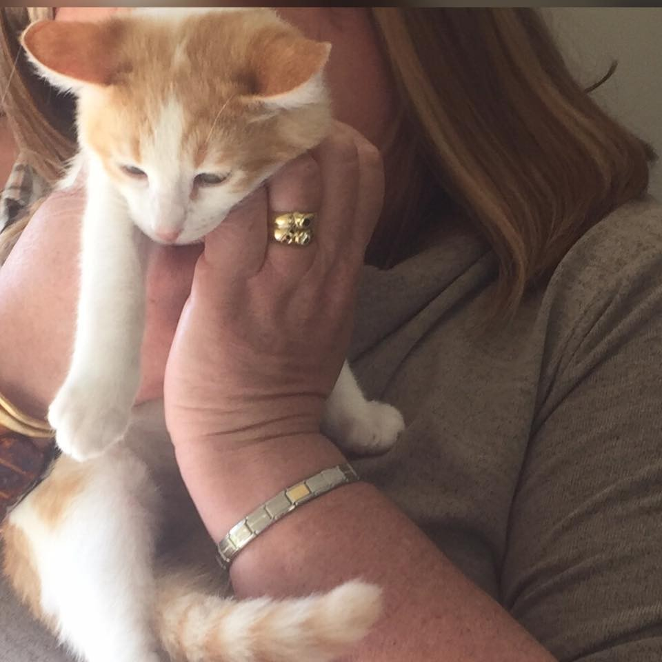 kitten-who-was-injured-in-forklift-accident-receives-love-and-care-then-turns-into-amazing-recovery-2