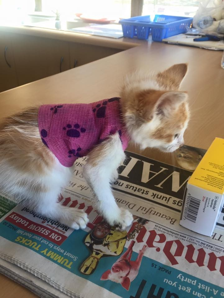 kitten-who-was-injured-in-forklift-accident-receives-love-and-care-then-turns-into-amazing-recovery-5