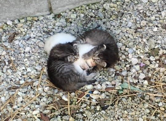 kittens-wrapped-around-their-trembling-sister-1