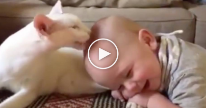 Kitty Discovers The Baby, Then Cameras Start Rolling, But Now We Just Can't Stop Watching..