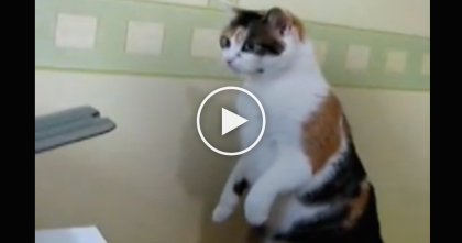 Kitty Notices Printer Eating Up The Paper, What He Does Next… His Reaction Is Just TOO Funny, OMG…