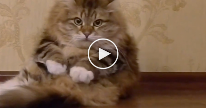 Kitty Starts Purring, But When They Start Recording?? OMG, This Is The Funniest Thing…Haha!!