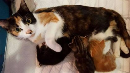Paralyzed Mom Cat Protects Her Kittens After Neighbor Unsuccessfully Tried To Murder Her