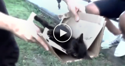 Poor Kitten Was Moaning For Help After Nearly Dying, But Then… OMG, Just Watch Till The End…