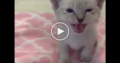 She Asks Her Kitten Some Questions, But Listen To The Response… OMG, This Is Pricelesssss!!