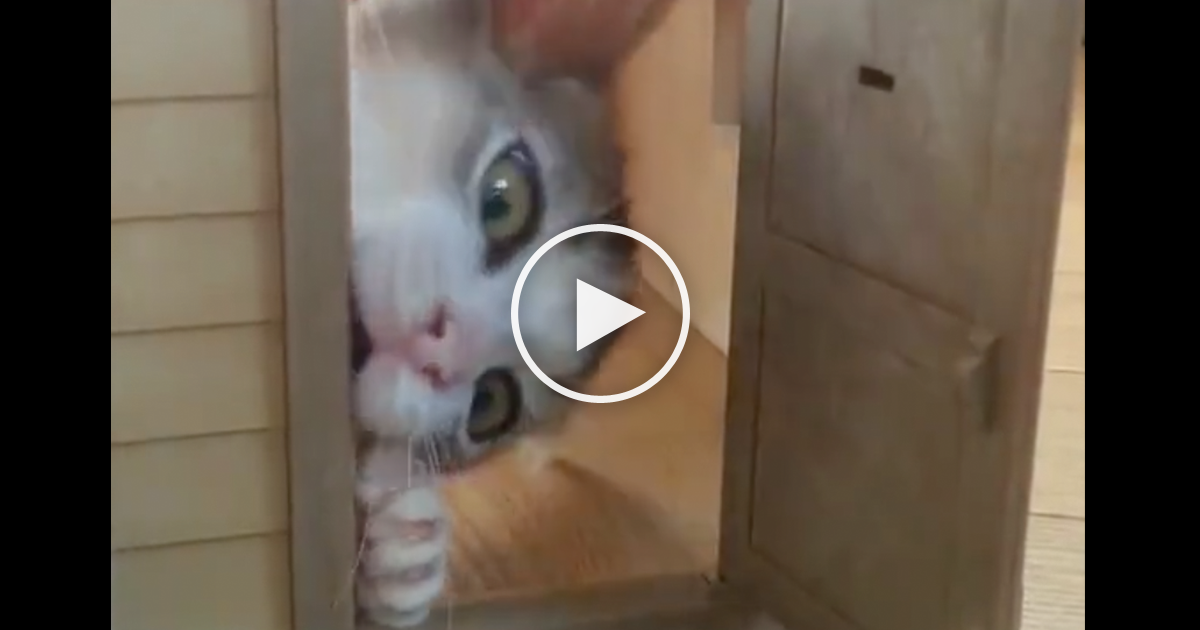 She Knocks On The Doll House Door But When You See Kitten?? Most Adorable Little Surprise Ever\u2026 OMG! | The Meow Post & She Knocks On The Doll House Door But When You See Kitten?? Most ...