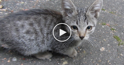 Someone Abandoned These Two Kittens, Then Kind People Noticed And Saved The Day