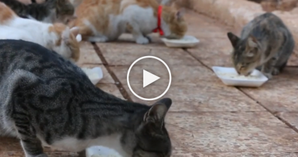 They Abandoned Their Cats While Fleeing, But This Man Stayed Behind To Care For Over 100 Cats