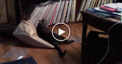 They Heard Some Noise In The Living Room, So They Ran Quickly To Investigate. OMG, Hilarious!
