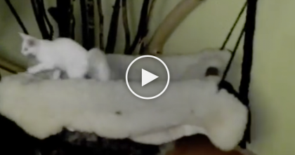 They Made A Swinging Bed For Their Cats… Now Watch How The Cat Reacts! Totally Awesome, GENIUS.