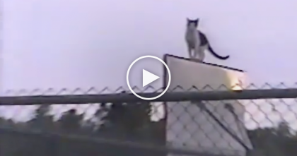 They Saw This Cat In Most Unlikely Place Ever, But When They Kept Watching… WOW, Are You Serious?!