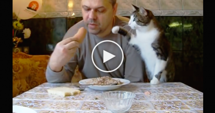 This Kitty Notices His Human Eating Something, But Just Watch… He CAN'T Get His Eyes Off it, LOL!!