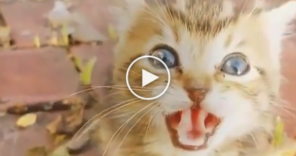 Women Shocked When She Discovers Kitten Laying On The Side Of The Road Asking For Help
