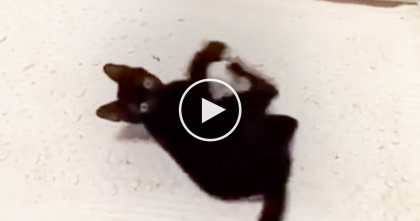 Black Cats Are PAWESOME, Just WATCH This Video And You'll See Why… I Love This, Awwww!!
