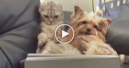 Cat And Dog Go On A Date Together, But Just Watch What They're Doing…SOO Funny And CUTE!!
