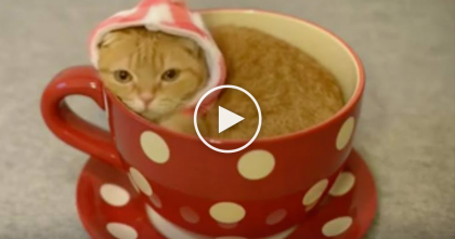 Cat Discovers His Favorite Place To Sleep, And It's Probably The Cutest Thing You'll See All Day!