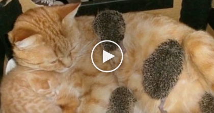 Cat Noticed Orphaned Animals In Need, But Just Watch… This Story Is AMAZING, Omg!!