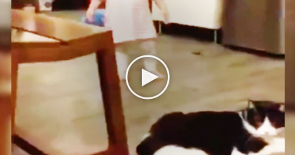 Cat Notices Little Human Walking By, But Then… 'BAM', I Didn't See That Coming!  LOL, Just Watch!
