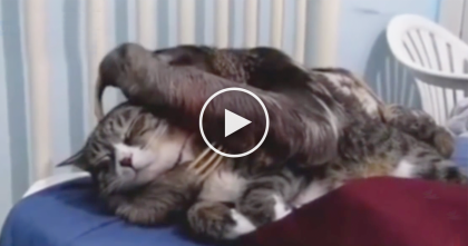 Cat Snuggles With Weird Looking Animal, But Just Take A Closer Look… OMG, I Don't Know What To Say?!
