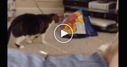 Cat Walks Over To Check Out A Bag, But When He Discovers What's Inside… It's Just Too Funny, LOL!!
